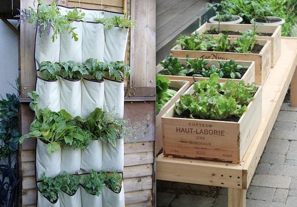 Orto in casa e in citt ecco come e perch fa bene a noi e all 39 ambiente vivere serenamente - Coltivare piante aromatiche in casa ...